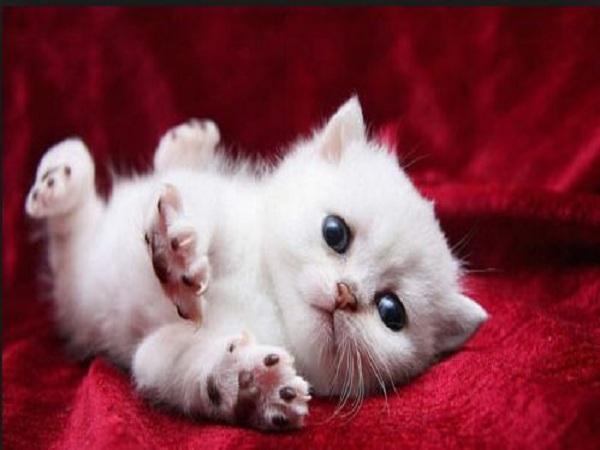 Nằm mơ thấy mèo có điềm báo gì?