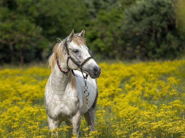Mơ thấy ngựa là điềm gì?